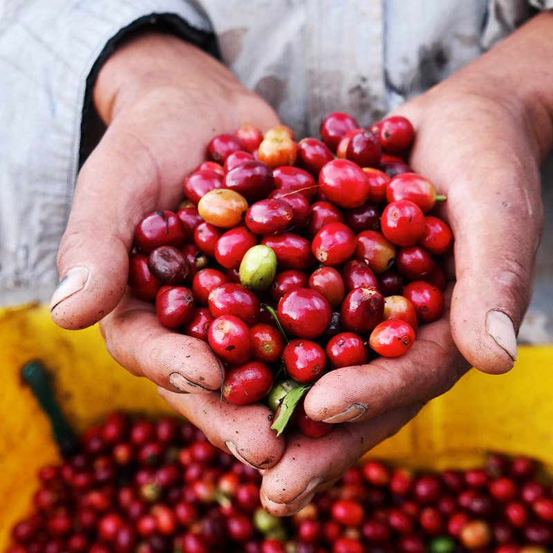 Bei der Kaffeerösterei Küper erhalten Sie eine vielfältige Auswahl an verschiedenen Kaffeebohnen.